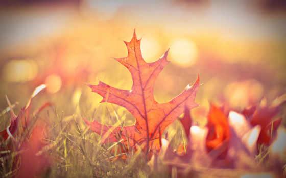 боке, листья, осень
