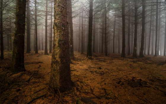 mist, ночь, лес