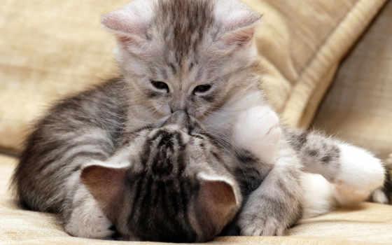 zhivotnye, поцелуи, животных