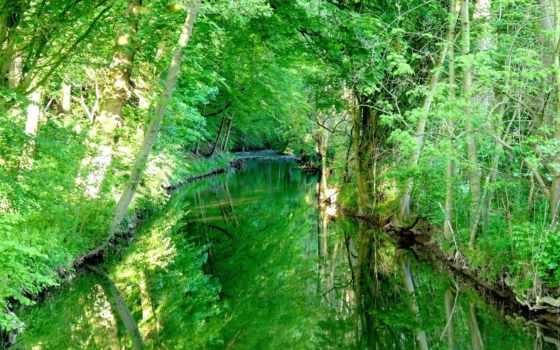 лес, forests, зелёный
