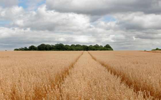 поле, трактора, трек