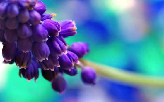 free, природа, цветы, mobile, телефон, изображение,