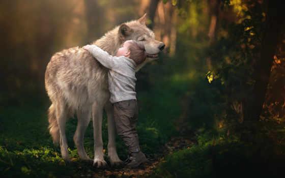 собака, animal, волк, история, палуба, том, amazing, детёныш, nice