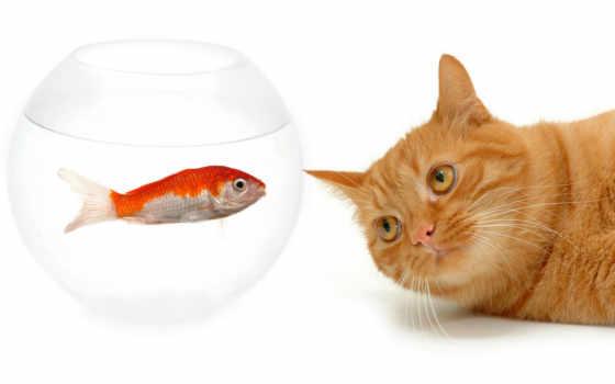 кошки, рыжий, рыбка, аквариум, cat, зуб, ipad, два, друга, лучших, коты, tit, котята, кошками, tempting, смотрите, tat,