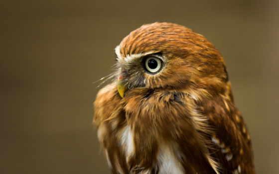 сова, глаза, птица Фон № 37062 разрешение 1920x1200