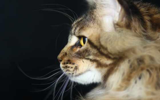регистрации, кот