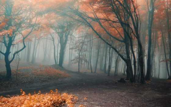 лес, осень, туман