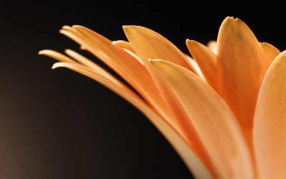 цветя, красиві, flowers