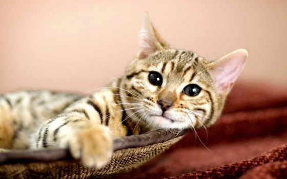 zhivotnye, кот