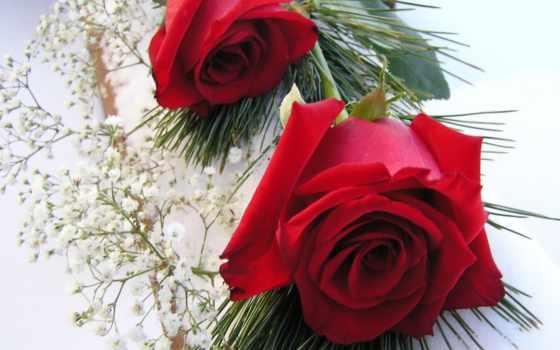 розы, цветы, добавил