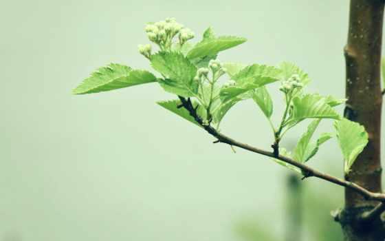 branch, подборка, leaf, весна, высоком, разрешений, зелёный,
