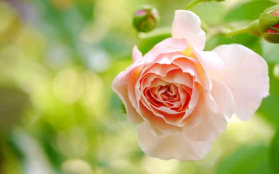 пляж, страница, макро, цветы, розовый, cvety, ночь, sun, лучшая,