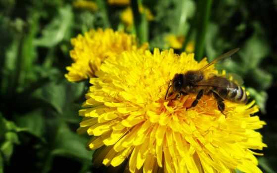 flowers, flower, pollen