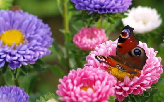цветы, макро, garden