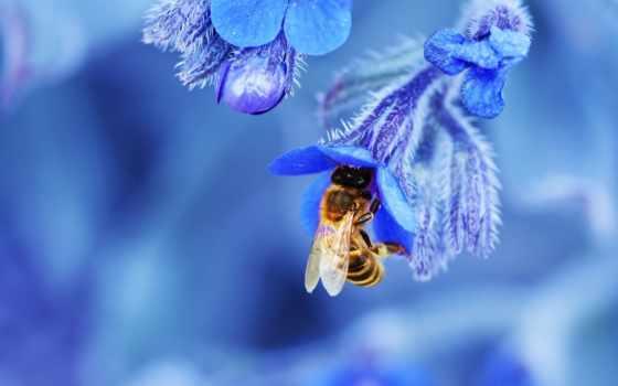 цветы, пчелка, макро
