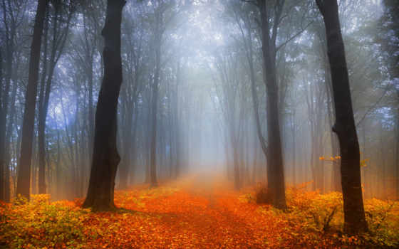 осень, foggy, лес
