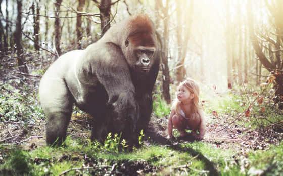 горилла, обезьяна, девушка, лес, обстановка, рисунок, art,