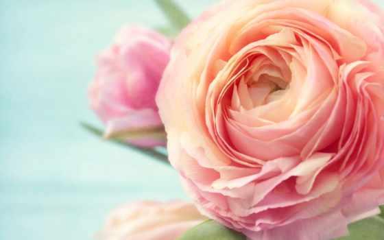 рождения, днем, cvety, красивые, женщине, изображений, тыс, яndex, найдено, анимации,