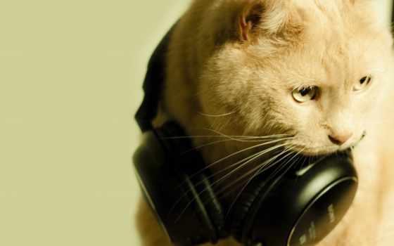 кот, наушники