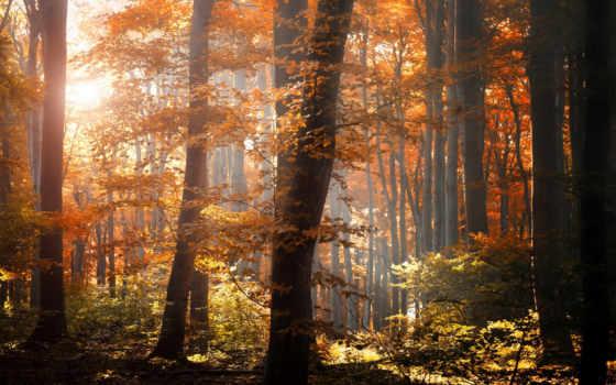 лес, осень, листья