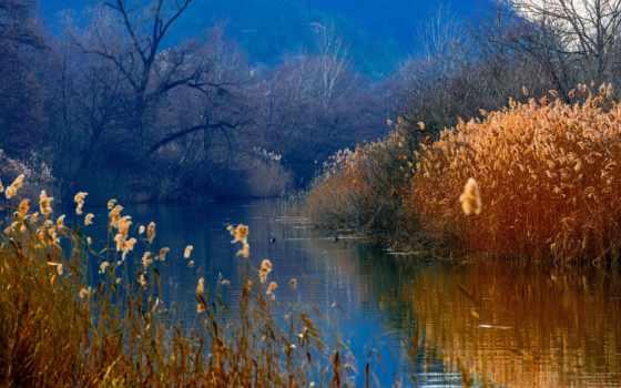 лес, озеро, камыш,