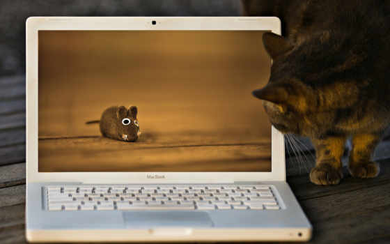 ноутбук, кот, lying