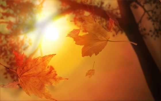осенние, листва, осень