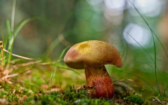 природа, mushroom, free
