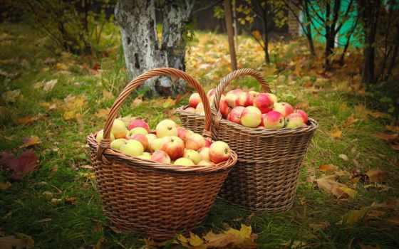 tapety, еда, осень, desktop, apples, плоды, изображение,