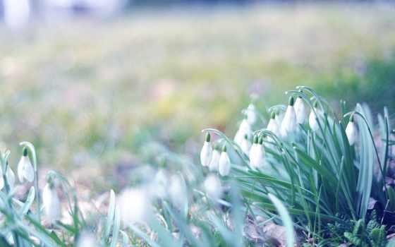 весна, подснежники, browse, трава,