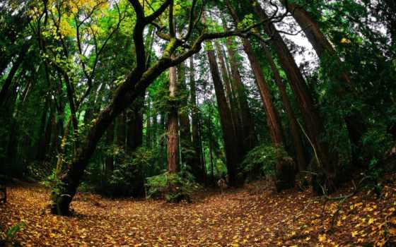 fisheye, природа, осень, сам, trees, объектив, moreover, против, страха, дерево, лес,