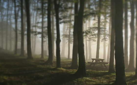 туман, лес
