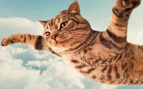 кот, барсик, flying