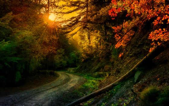 irens, ted, природа, solarsoul, заставки, дорога, высоком, качестве, красивая, trees, rays,
