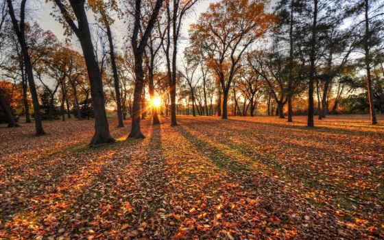 parque, otoño, outono, árvores, descargar, gratis, parede, fondos,
