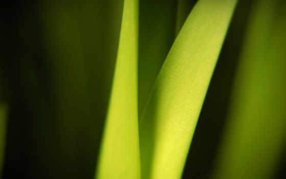 leaf, blade, nice, sonya, high, clean, soul,