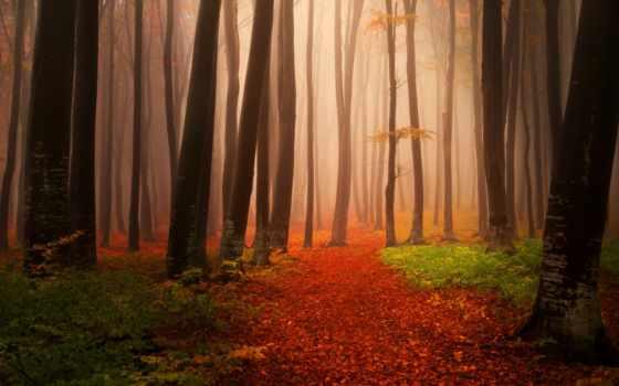 foggy, осень, лес, стена, misty, murals, mural, khoirulmahmudin, images,