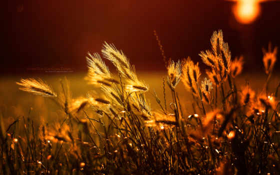 рис, basmati, sun, природа, фразы, home, ir, non,