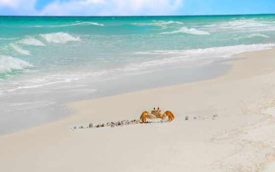 море, crab, песок