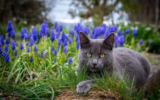 кот, black, grey, kitty, трава, глаз, смотреть