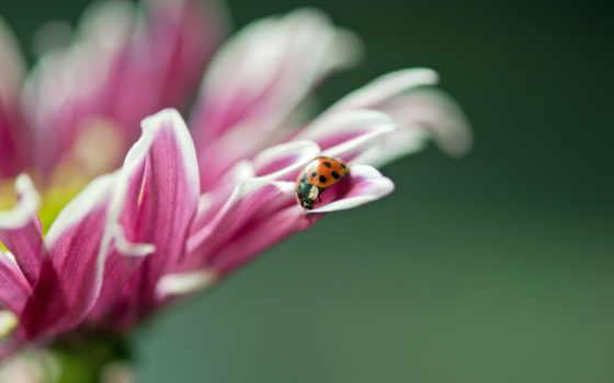 макро, цветок Фон № 23947 разрешение 2560x1600