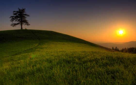 природа, деревья, картинка, дерево, пейзажи, красивая, автомобили, авто, машины, травка,
