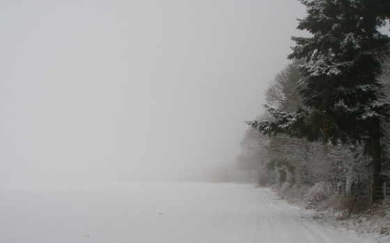 деревья, зима