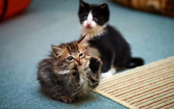 котята, заставки, леопарды