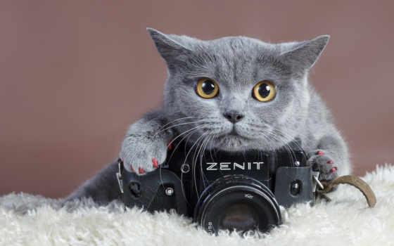 зенит, фотоаппарат, амкар