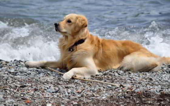 море, собака, друг