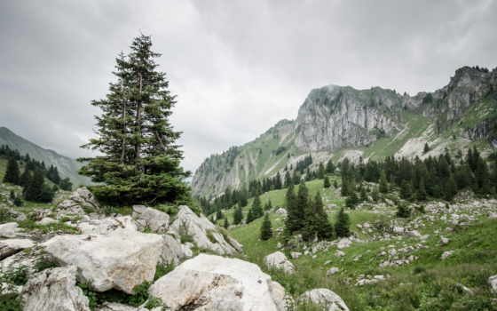 trees, rocks, mountains, природа, скалы, зелёный, landscapes,