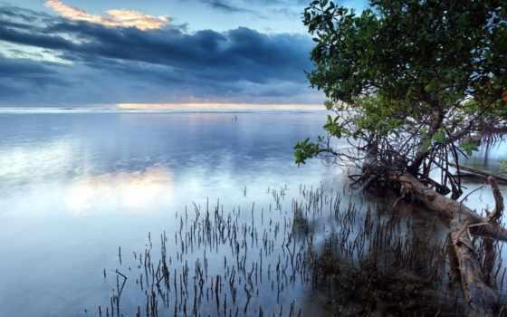 которых, есть, тег, oblaka, всех, trees, море, гладь, anywalls, пейзажи -,