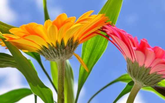 kwiaty,
