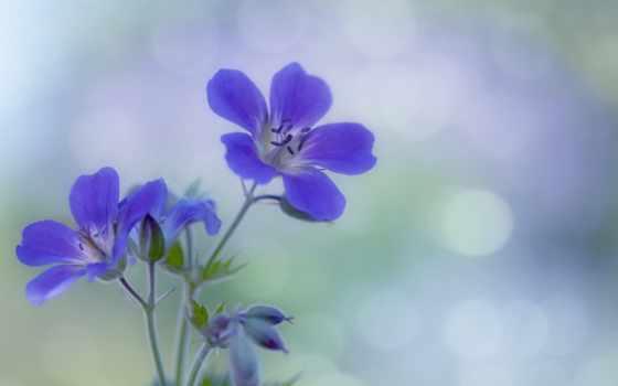 цветы, purple, fone, забыть, разрешениях, разных,